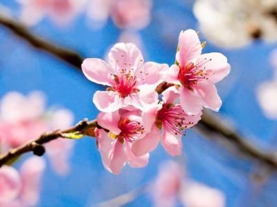Verso la primavera