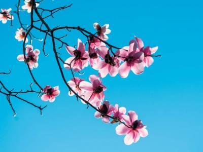 Tempo buono, arriva la primavera